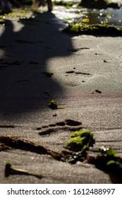 Footprints on a sandy beach left by a woman, green seaweed, the sun is shining, footprint