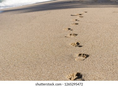 Footprints on the sandy beach, sea waves, nature background