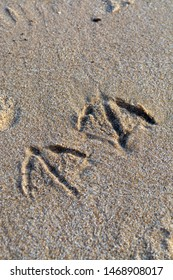 Footprints on seagull in sandy beach close up