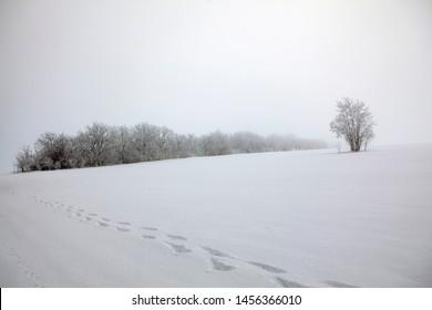 footprints on the snowy field