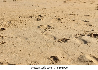 Footprints in the Sand/ Background