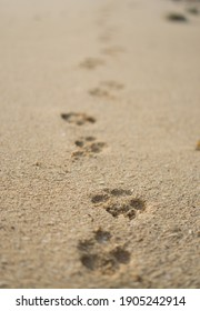 footprints in the sand made by a dog