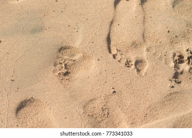 footprints in the sand, sea beach