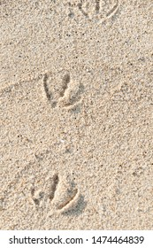 Footprints of a seagull on the sand