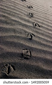 Footprints of a seagull on a windswept beach