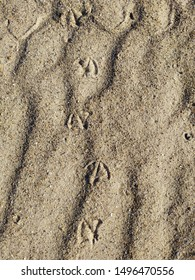 Footprints of a seagull in the sand