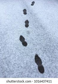Footprints in the snow on urban asphalt a grey winter day.