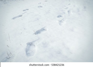 Footprints in snow. Snow texture with foot prints.