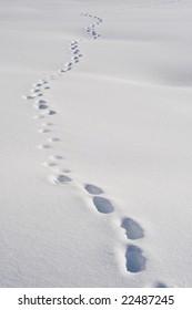 footprints in a snowy field in the swiss alps