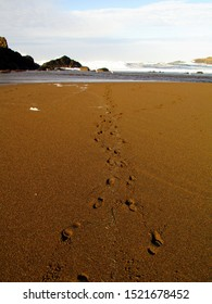 Footprints through the sand to the ocean ; an invitation and inspiration