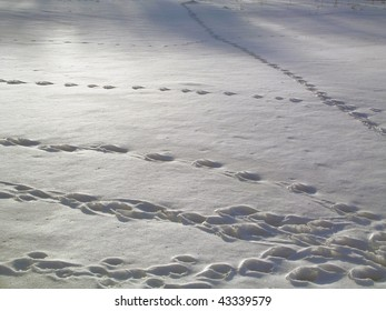 footstep on snow
