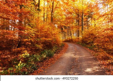 In the footsteps of autumn in the woods
