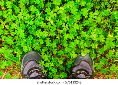 footsteps in the green
