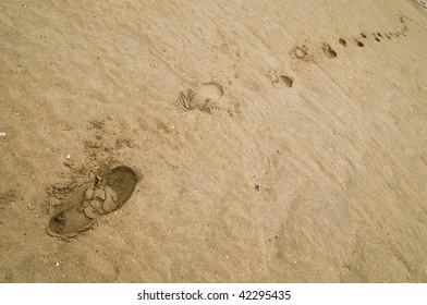 Footsteps on the red sand of a beach
