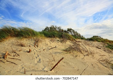 Footsteps in the sand. Sandy shore and blue sky.Sand dunes in the national park in the Baltic. Fine sand, bushes and driftwood. Nature of the Baltic. Natural texture. Photo wallpapers of  sandy beach.