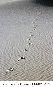 Footsteps walking off in rippled sand dunes