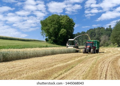 Forage harvester and tractor with trailer at harvest of whole crop silage for biogas on a cereal field