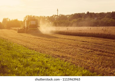 Forage harvester working during the golden hour of sunset on a scenic wheat field