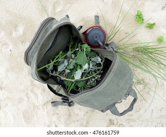 Foraging for edible wild plants (lamb's quarters and searocket) into a green backpack on the beach of Llanddwyn Island, Anglesey, Wales.