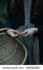 Foraging for nettles to use for natural dyeing fabric
