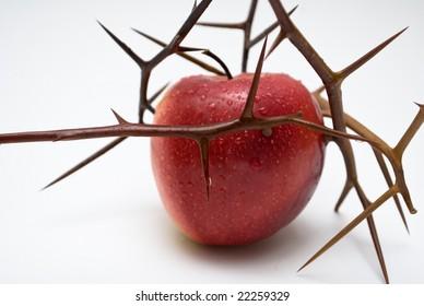 forbidden fruit is sweet