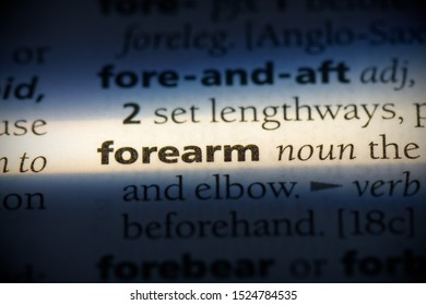 forearm word in a dictionary. forearm concept, definition.