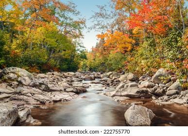 Foreat stream in the fall (Above Mary Ann Falls, Highlands National Park, Cape Breton, Nova Scotia, Canada)