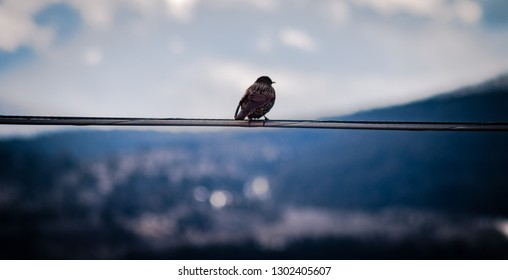 In the foreground, a bird sits on a wire against a bokeh sky, while gazing off into the landscape. In the background, a dark and blurry mountain with trees.