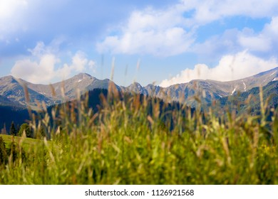 In the foreground blurred grass, and in the background a beautiful range of Tatra mountains in Poland on a sunny day
