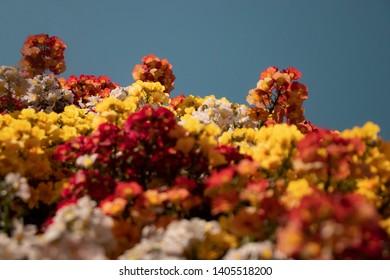 foreground: blurred yellow, white, red and orange flowers; background: red and orange flowers with blue sky (location: Limone sul Garda, Italy)