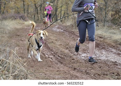 In the foreground a dog and its owner taking part in a popular canicross race, in the background (out of focus) several athletes