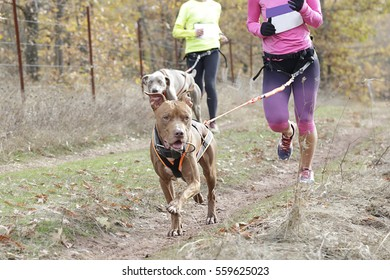 In the foreground a dog taking part in a popular canicross race, in the background a female athlete
