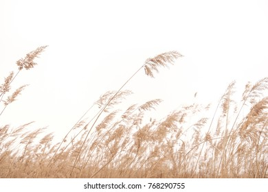 Foreground of dried grass in spring with white background