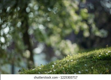 foreground focused on spring fresh grass and background blooming trees, source of positive energy, spring, sun, light, depression, joy