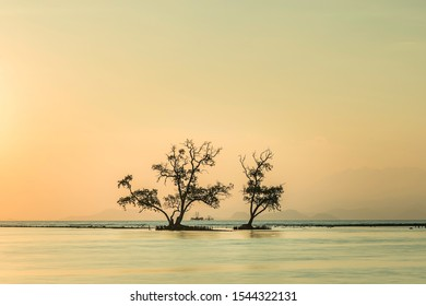 In the foreground oak tree in the background sunset in on beach