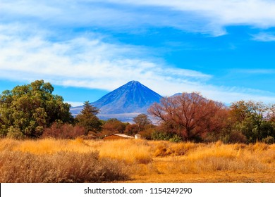 In the foreground Yellow vegetation, trees and the background Licancabur volcano and blue sky with clouds. San Pedro do Atacama, Chile.13 July 2018.