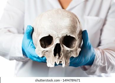 Forensic pathologist. Doctor in rubber gloves holding human skull.