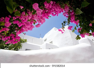 Foreshortening of Mykonos island, with the typical white construction framed by beautiful bougainvillea