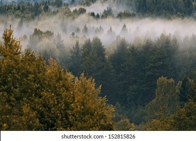 forest above the fog