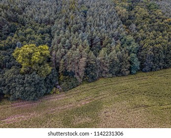 Forest from above with meadow, with other color