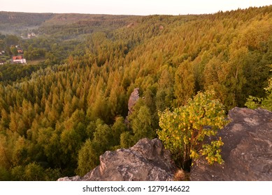 Forest from above in summer.