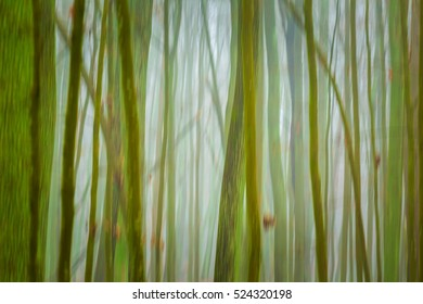Forest abstract blurred background. Autumn, nature backdrop concept with trees trunks blurred.