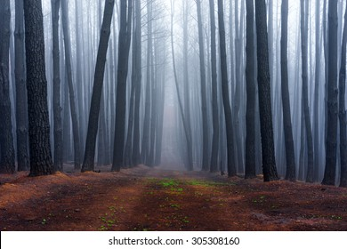 Forest in Adelaide Hills, South Australia