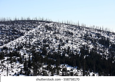 Forest after bark beetle calamity - boundaries Czech Republic/Bavaria