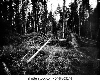 Forest after the big storm, Co. Fermanagh, Northern Ireland. This black and white camera obscura photo is NOT sharp due to camera characteristic. Taken on analogue photographic large format camera