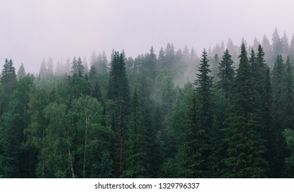 The forest after rain