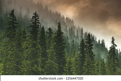 The forest after the storm