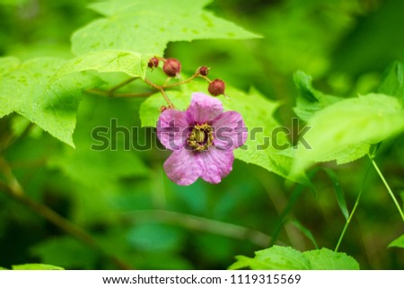 Forest Alive Living Things Nature Stock Photo Edit Now 1119315569