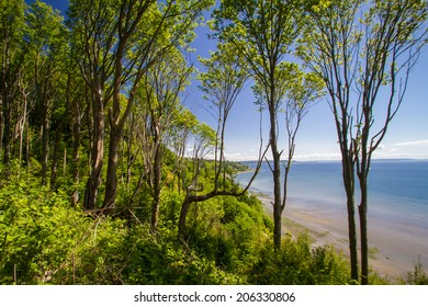 A forest along a bluff, overlooking the beach and Puget Sound in Washington state