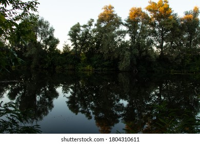 forest along the orel river in summer in ukraine in the dnipro city in the morning